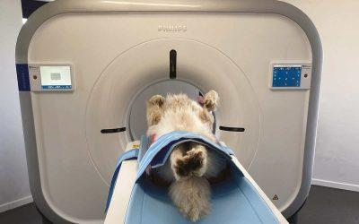 Visé : La clinique vétérinaire installe un scanner flambant neuf